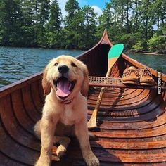 Much boat such smile WOW (Credit: @kjp @puffinandbennie) #dogs #9gag @9gagmobile #instafollow #funny #L4L #lol #awesome