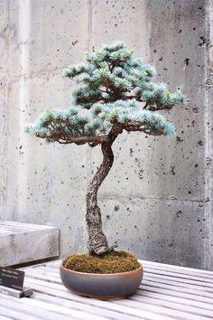 Bonsai tree pot art 56 ideas for 2019 Bonsai Tree Types, Indoor Bonsai Tree, Bonsai Plants, Bonsai Seeds, Tree Seeds, Bonsai For Beginners, Juniper Bonsai, Magic Garden, Garden Art
