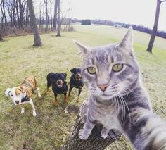 Tractari-Auto-Constanta.ro: My selfie fot today