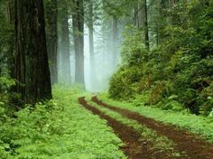 finland forest (metsä) way Forest Trail, Forest Path, Redwood Forest, Forest Road, Misty Forest, Oregon Forest, Fern Forest, Evergreen Forest, Foggy Forest