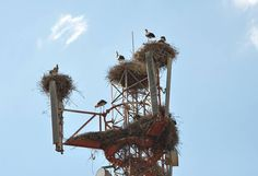 Stork, Type 3, Theater, National Parks, Birds, Facebook, Theatres, Bird, Teatro