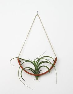 Hanging Air Plant Cradle, Natural TerraCotta Planter Vase by Mud Puppy contemporary indoor pots and planters