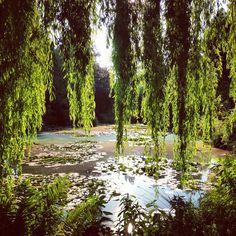 Claude Monet's garden in summer time.