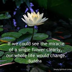 If we could see the miracle of a single flower clearly, our whole life would change. ~Buddha  - From http://www.simplyspiritualliving.org/simply/if-we-could-see-the-miracle-of-a-single-flower-clearly-our-whole-life-would-change/
