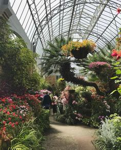 Some people know how to grow a garden! The winter gardens in Auckland are gorgeous! (And they smell amazing) Auckland, Plants Are Friends, Green Rooms, Winter Garden, Botanical Gardens, New Zealand, Sidewalk, Greenhouses, Pictures