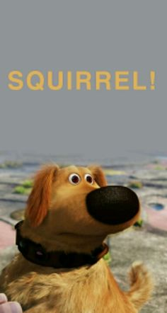 1000 images about dug on pinterest squirrel dogs and