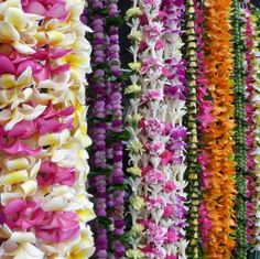 Hawaiian Lei Greetings | Everyone who's passionate about hula is in Hilo to watch the action ...