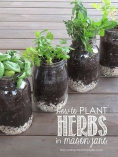 plant herbs in mason jars - great for indoor windowsill gardening | 26 DIY Mason Jar Crafts You Can Make In Under an Hour at http://DIY Projects/com/mason-jar-crafts-in-under-an-hour