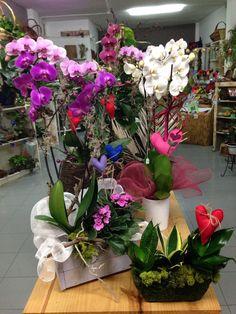 Orquídea y plantas de interior