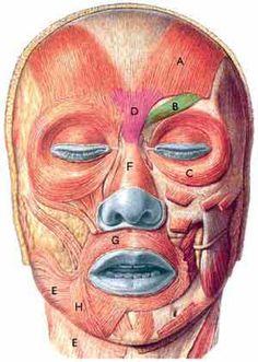 Fisioterapia de la parálisis facial. - Artículo de Fisioterapia