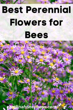 Herb Garden Design, Vegetable Garden Design, Garden Ideas, Best Perennials, Flowers Perennials, Planting Flowers, Bee On Flower, Flower Power, Tall Plants