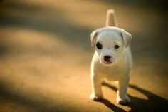 Okay so I am soo not the type to fall for every cute animal pic out there..but MAN this pup is flippin CUTE!! :)