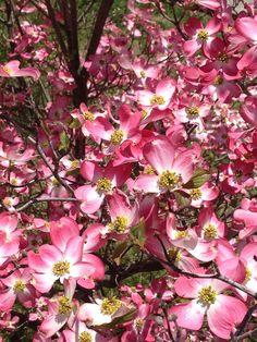 Spring in Springfield, Ill.