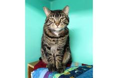 Update: Adopted :-) Joey has been adopted from the Seattle Humane Society