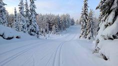 Kuvahaun tulos haulle hiihto