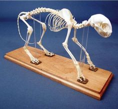 I wonder if it would be too traumatizing for the kids if i had my cat's skeleton articulated when she dies...