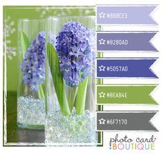 Hydrangea blue, green and gray