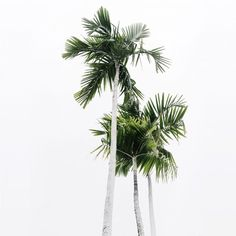 Palm. @thecoveteur