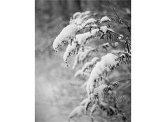 Winter Photography Black and White by LostInTheValleyPhoto on Etsy