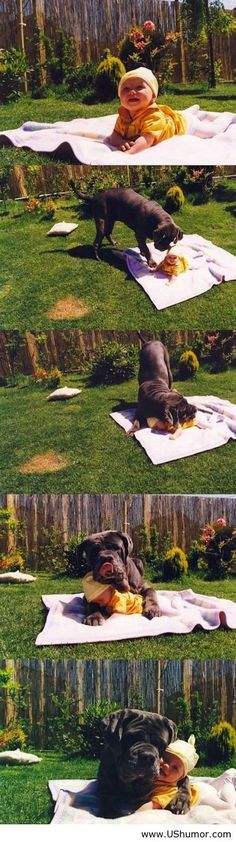 Amazing friendship between a dog and a little kid US Humor - Funny pictures, Quotes, Pics, Photos, Images