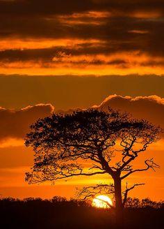 Serengeti sunset, Tanzania.