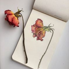 Moleskine — Artwork by Art Sketches, Art Drawings, Pencil Drawings, Pencil Art, Vintage Clip Art, Arte Sketchbook, Moleskine Sketchbook, Fashion Sketchbook, Design Floral