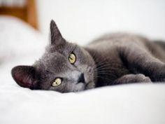 La caca de gato puede ayudar a curar el cáncer: http://www.muyinteresante.es/innovacion/articulo/la-caca-de-gato-puede-ayudar-a-curar-el-cancer-441405942425…