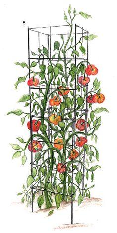 Heavy-Duty Galvanized Steel Cages - Gardening