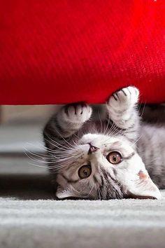 Parece que el mundo se ha puesto del revés :)  #cats #gatos #adorable #cute #friends #amigos #love #mascotas #pets