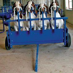 Four-Head Lamb/Goat Chariot Nasco Farm & Ranch catalog. #BabyGoatFarm