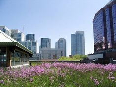 A look at how the green roof can have a positive influence on your bank balance.