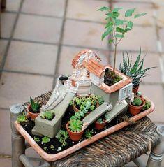 Mini estructuras que albergan vida vegetal y que evolucionan más allá de su estado y valor inicial. #nolinde #moss #succulents