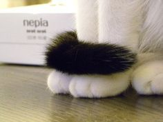 hand_cat11