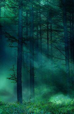 Dark Green, The Enchanted Wood photo via hiroshi