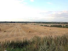 Peng view of harvesting