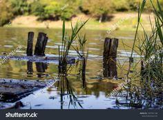 Piles Lake Water Reflection témájú stockfotó (szerkesztés most) 1497391148 Lake Water, Water Reflections, Park, Outdoor Decor, Photography, Image, Shop Signs, Photograph, Fotografie