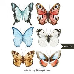 Illustration about Beautiful watercolor vector butterfly set different types. Illustration of like, ornate, nature - 50075911 Butterfly Watercolor, Illustration, Motif Floral, Vector Pattern, Animal Drawings, Vector Art, Vector Stock, Graphic Art, Hand Painted