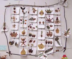 leaf pictures in twig frame: