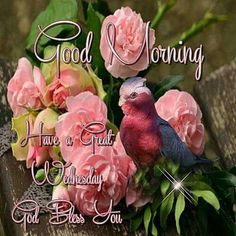 Good Morning, Have A Great Wednesday, God Bless You good morning wednesday wednesday quotes good morning quotes happy wednesday good morning wednesday quotes wednesday image quotes happy wednesday morning wednesday morning facebook quotes happy wednesday good morning