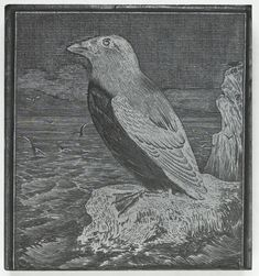 Woodblock depicting a bird on a cliff, wood, one of a collection of woodblocks of illustrations used by W. & R. Chambers Ltd, 1840s - early 20th century.