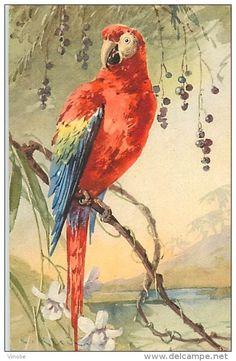 Postcards / perroquet - Delcampe.net
