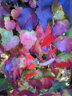 Nature Colors - Colorfull by inetflash, via Flickr