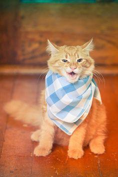 Rosie cat likes it! Trying his sample of Merrick cat food.