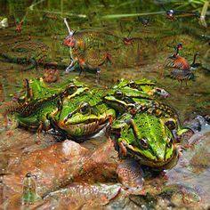 Dream Creatures, Frog, DeepDream