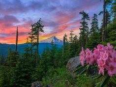 8 Best Scenic Hikes in Oregon (with Photos & Map) - TripsToDiscover Landscape Photos, Landscape Photography, Oregon Mountains, Rocky Mountains, Hood River Oregon, Photo Maps, Oregon Travel, Best Hikes, Future Travel