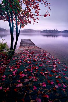 World Best Things: Beautiful Nature Lake Dock, Thousand Islands, Canada Beautiful World, Beautiful Places, Beautiful Scenery, Amazing Places, Amazing Photos, Natural Scenery, Beautiful Beautiful, Beautiful Flowers, Beautiful Pictures Of Love