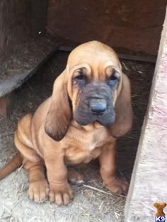new found love. bloodhounds.