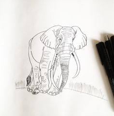 Buy Now: Phil Rodriques | The Gentle Giant - Elephant Sketch