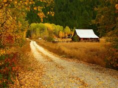 autumn, fall, and leaves image Country Life, Country Roads, Country Living, Haunted Tree, Into The West, Autumn Scenes, Autumn Cozy, Autumn Fall, Seasons Of The Year