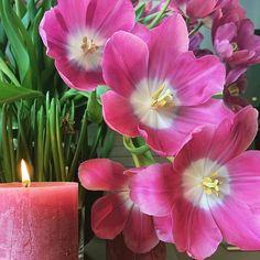 Seks kule klatreplanter du vil lykkes med - Tusenfryden Plants, Flora, Plant, Planting